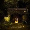 南京霊谷寺-暗闇を飛び交う蛍-ホタルを撮影するのは楽じゃない(3)