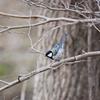 【野鳥】新潟 春の野鳥②