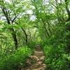 新緑と木漏れ日の道。