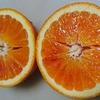 血のオレンジ・・・