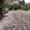 小石川植物園10