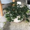 エアープランツと観葉植物にかこまれて🍃