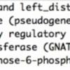 バクテリアのIS検出ツール  IS_mapper