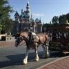 【世界で最初のディズニーパーク】カリフォルニア・ディズニーランドを楽しむための映画10作