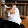 猫とお口まわり玉ねぎ隊