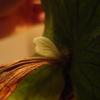 トマホークの貯水葉が綺麗に展開してくれた。
