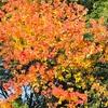 秋の紅葉がキレイ