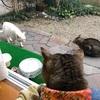 騒がしい庭 ~飼い猫を外に出さない方がいい理由~