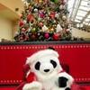 上野はパンダがいっぱい!パンダフル・クリスマス