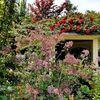 【横浜  イングリッシュガーデン】美しいイギリス式庭園に咲き誇るバラを見に行こう