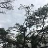 シンガポールでいちばん暑い月は?涼しい月は?