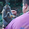 【ちょっと危険】バリ島ウブドの「モンキーフォレスト」で猿と戯れる