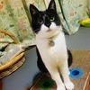 【猫のトイレ問題】猫が粗相をするのはなぜ?飼い主も猫ももっと快適になるトイレのお話
