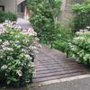 この季節は散歩で癒える♡京王堀之内で紫陽花散歩♡&八王子散策記事まとめ!