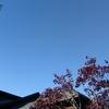薄手ダウン必須:バークレー初夏の気候