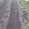 キャベツの定植と落花生試し堀