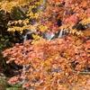 白布峠の紅葉