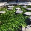 庭師とめぐる、庭めぐり~日本一広大な日本庭園「栗林公園」後編~