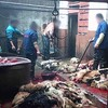 毛皮のために中国で犬が虐殺されています