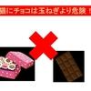 緊急速報!!犬や猫にはチョコは玉葱をあげるより危険です!