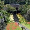 雨が降る中、西方寺に咲く彼岸花を見に行く