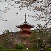 桜の時期に清水寺で撮影しました🌸