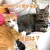 猫のえづく咳が心配!原因は?ノミアレルギーを治したかもしれない方法