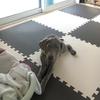 【ダメだったもの】床の滑り防止マット