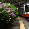 箱根登山鉄道 あじさい散歩 #1 (箱根湯本駅、塔ノ沢駅)