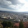 松田山ハーブガーデンの桜まつり(2月14日の様子)