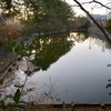 くりはまみんなの公園の池(神奈川県横須賀)