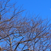 大寒の朝の霜&カワセミが魚をペシペシ&テレビ愛媛の「今日の俳句」に♪