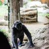 開園直後の動物園は動物たちも活発で写真の撮りがいがあった