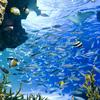 【サンシャイン水族館大量殺魚事件】水槽の94%1235匹死亡