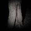 【小ネタ】夜間樹液採集の経験