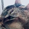 空腹のネコ、それぞれの起こし方。
