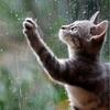 【旧暦】今日まで「穀雨」