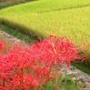 2年以上海外へ滞在していた私が感じている、日本の四季の素晴らしさ
