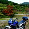 阿讃中央広域農道プチツーリング ~紅葉にはまだちょっと早い そして猫~