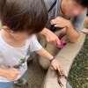 【相模川ふれあい科学館】科学館だけどカビパラや魚、リクガメにエサやりできる!親子で千円未満で楽しめちゃう!