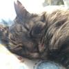 ブログ4周年 2017年 猫の日