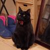 今日の黒猫モモ&白黒猫ナナの動画ー645