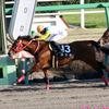 JRAジャパンC(G1)「話題沸騰」アノ馬の鞍上がついに決定! 代打職人・池添謙一と「夢のタッグ」叶わず……。東京最終レース仕様で好走態勢に