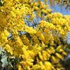 『 花たび ⑰ 』