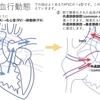 総肺静脈還流異常(TAPVC, TAPVR)について 疾患33