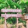 大滝ナイヤガラの滝を行く【何もないのがいい】