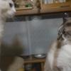 猫もケンカするほど仲が良い?