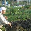 農作業28日目