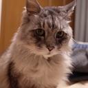 kindleと猫と写真とか。
