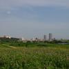 江戸川から松戸と市川を撮ってみた